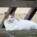 ネコ,猫〈著作権フリー無料画像〉Free Stock Photos