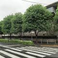 並木道,横断歩道,千駄ヶ谷〈著作権フリー無料画像〉Free Stock Photos