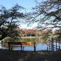 ベンチ,お堀,弘前公園〈著作権フリー無料画像〉Free Stock Photos
