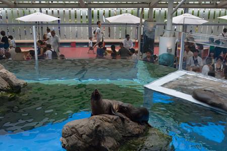 20140816 京都水族館&大 0033