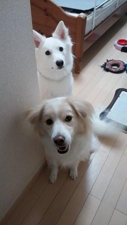 鶴千代と小松「お出かけでしゅか!?」