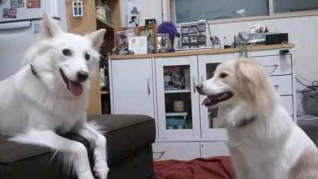 鶴千代と小松「今日は楽しかったでちねー!!」