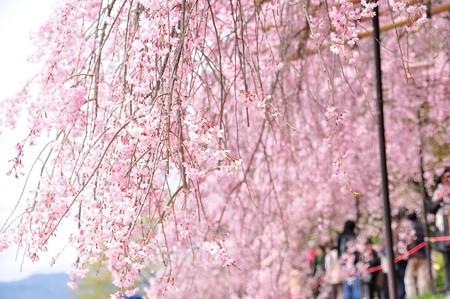 行く春を惜しむ・・・