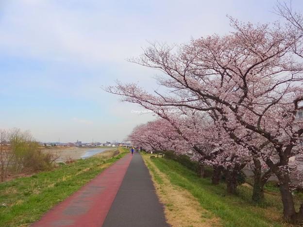 桜2020
