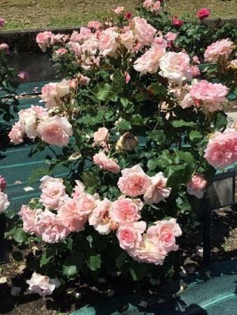 RoseFair09