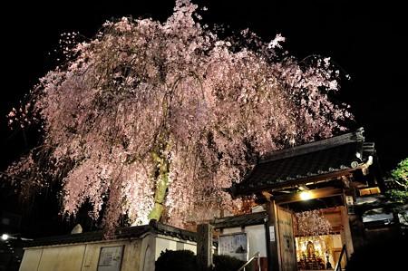 恵福寺 夜桜ライトアップ