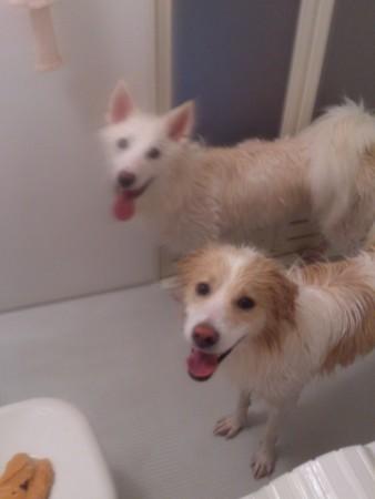 鶴千代と小松「入浴中です!」