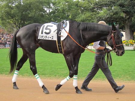 リオンディーズ バランス良い馬体