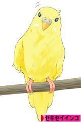 にほんブログ村 鳥ブログ セキセイインコへふ