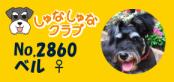 しゅなしゅなクラブ2860
