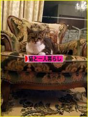 にほんブログ村 猫ブログ 猫と一人暮らしへ