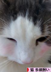 猫 多頭飼いブログランキング参加用リンク一覧
