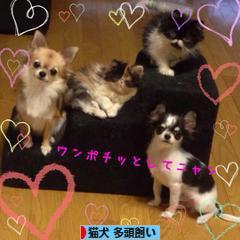 猫ブログ 猫犬 多頭飼いへ