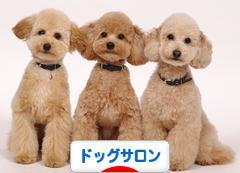 にほんブログ村 犬ブログ ドッグサロンへ