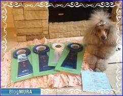 にほんブログ村 犬ブログ 訓練競技会へ
