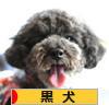 にほんブログ村 犬ブログ 黒犬へ