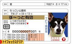 にほんブログ村 犬ブログ トイフォックステリアへ
