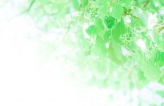 夏の緑.jpg