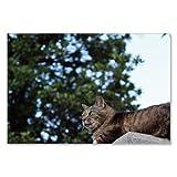 のら猫ポストカードシリーズ (a stray cat) No.017