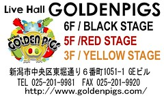live hall GOLDENPIGS