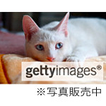 geltyimages_Blue-eyes-cat201304sanae.o