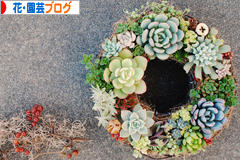 にほんブログ村 花・園芸ブログへ
