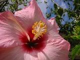 ルネッサンスリゾート 庭の花