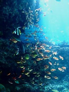 美らうみ水族館水槽2