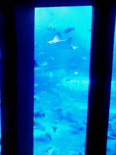 美らうみ水族館水槽1