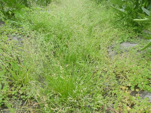 草が生い茂って