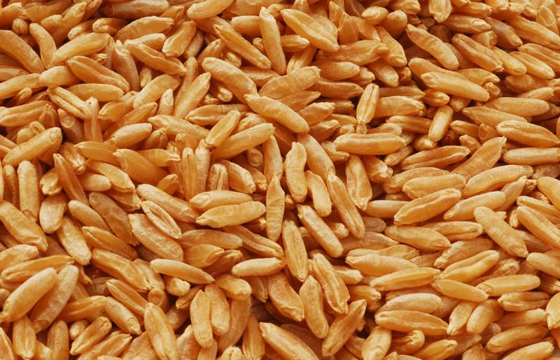 Kamut_grain