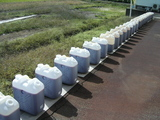 ポリ容器にて養生中の赤菌2