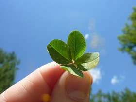 four-leaf-clover-19776_640