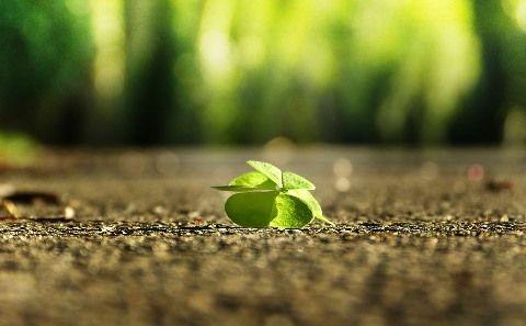 four-leaf-