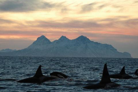 orca-2358366_1280