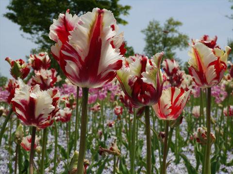 満濃のパーロット花壇