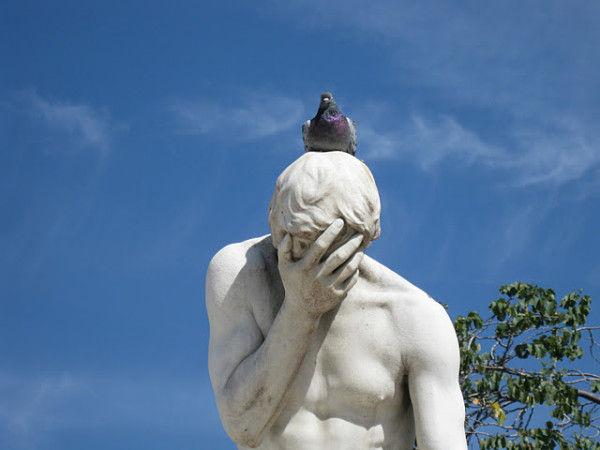 【画像】発想の勝利!?「ハトに乗られるとホントへこむわー」