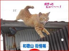 にほんブログ村 地域生活(街) 関西ブログ 和歌山 その他の街情報へ