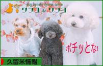 にほんブログ村 地域生活(街) 九州ブログ 久留米情報へ