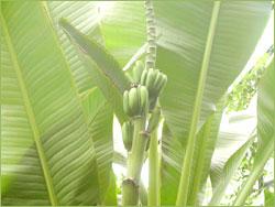 エジンバラ王立植物園