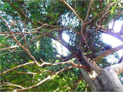 春の風を葉いっぱいに吸い込んだ木々
