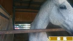 にほんブログ村 アウトドアブログ 乗馬・馬術へ