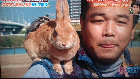 「肩乗りウサギ」の画像検索結果