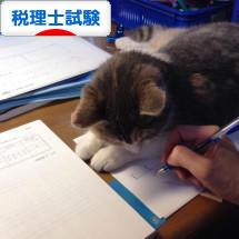 にほんブログ村 資格ブログ 税理士試験へ