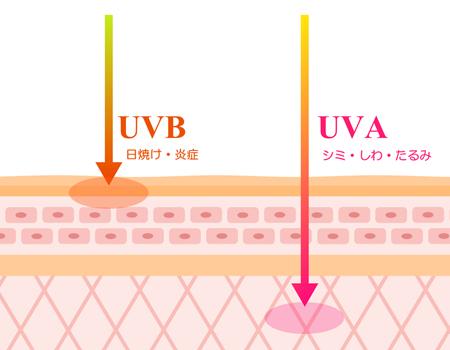 UVAとUVBの違い