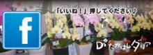 花と緑の部屋 たかはしダリア facebookページ