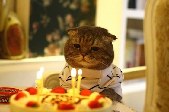「誕生日」の画像検索結果