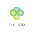 4-BBエキス