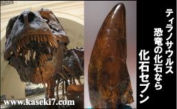 恐竜 化石