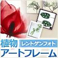 心を潤す植物アートフレーム専門店